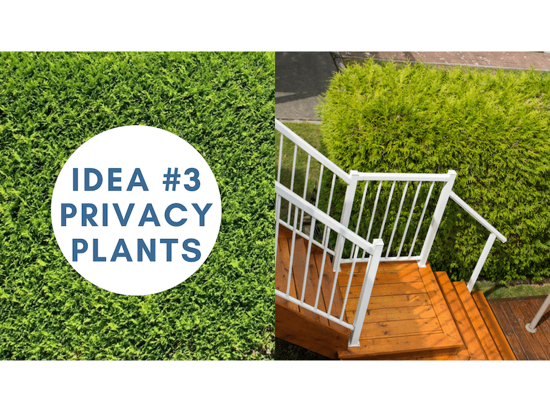 get more privacy on your sundeck with privacy plants | Citywide Sundecks and Railings