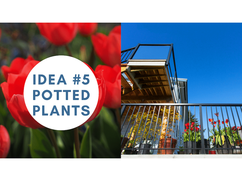 create privacy on your sundeck with potted plants   Citywide Sundecks and Railings